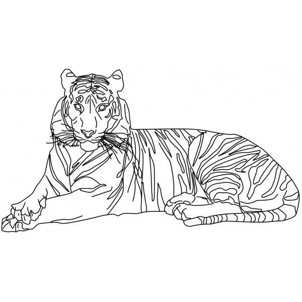 Malvorlage Tiger ✎_ Bezauberndes Bild!